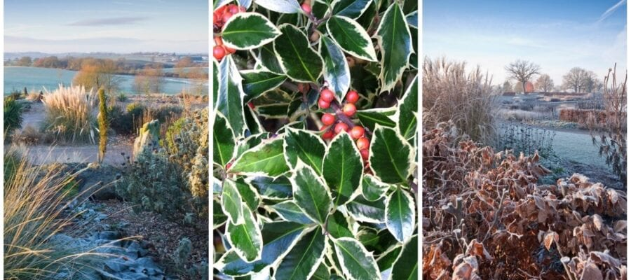 Beat the winter blues with the RHS