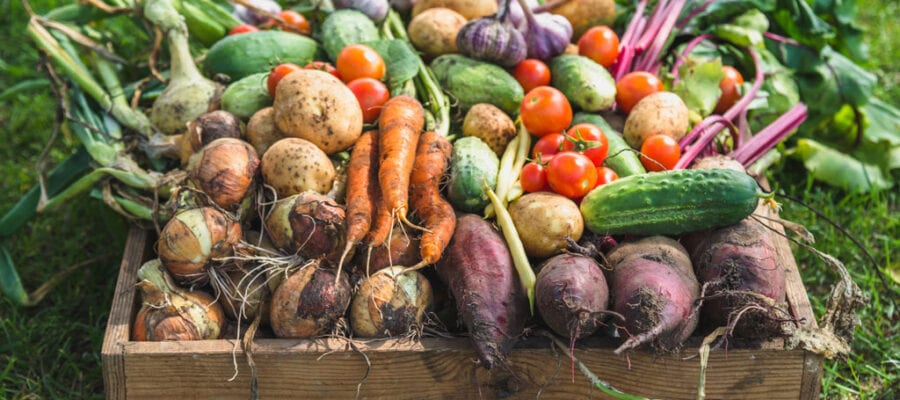 From spade to fork: Growing your own with Kitchen Garden