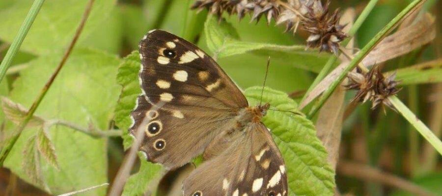 Forest habitats for butterflies