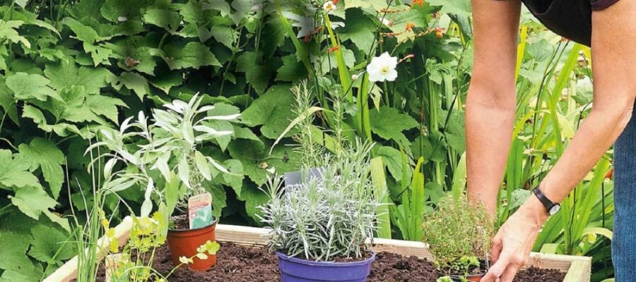 Make A Herb Bed