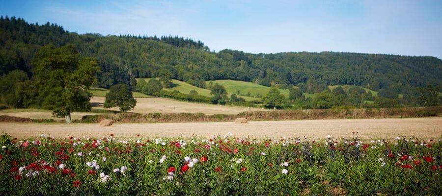 Heatwave brings bumper year for British flowers