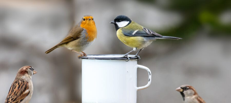 RSPB's Breakfast Birdwatch