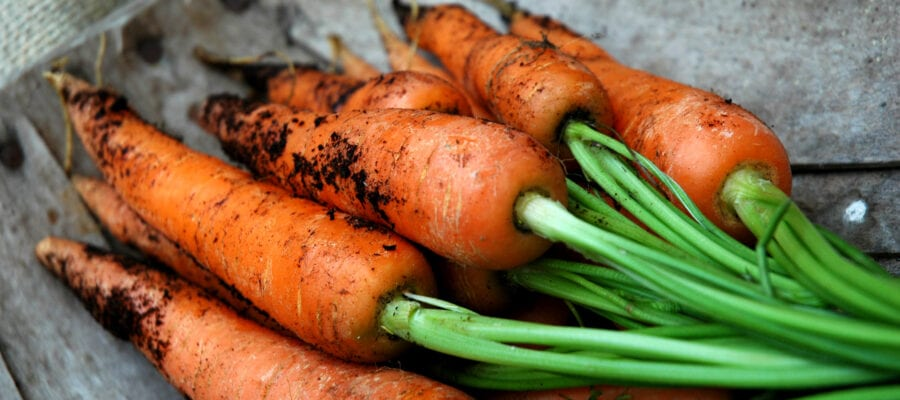 Carrot supplies hit by heavy flooding