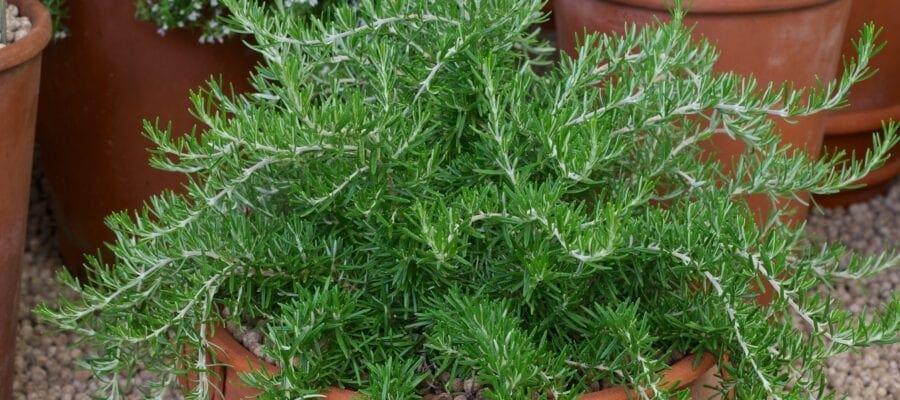 Don't bring back a souvenir plant disease