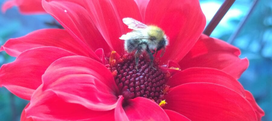 Sign up to grow blooms for bees
