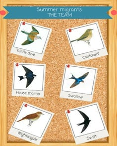 Our swift guide to migrating birds!