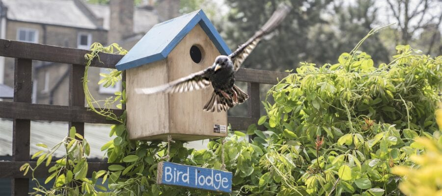 Keep Nest Boxes Simple