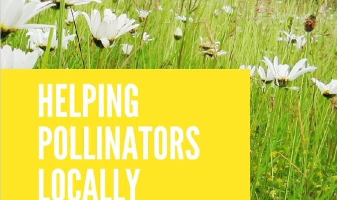Councils urged to adopt pollinator action plans