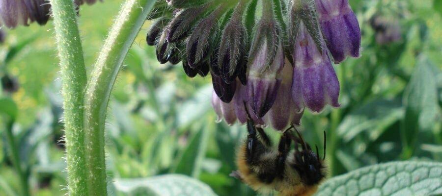 Neonics 'do harm bees'