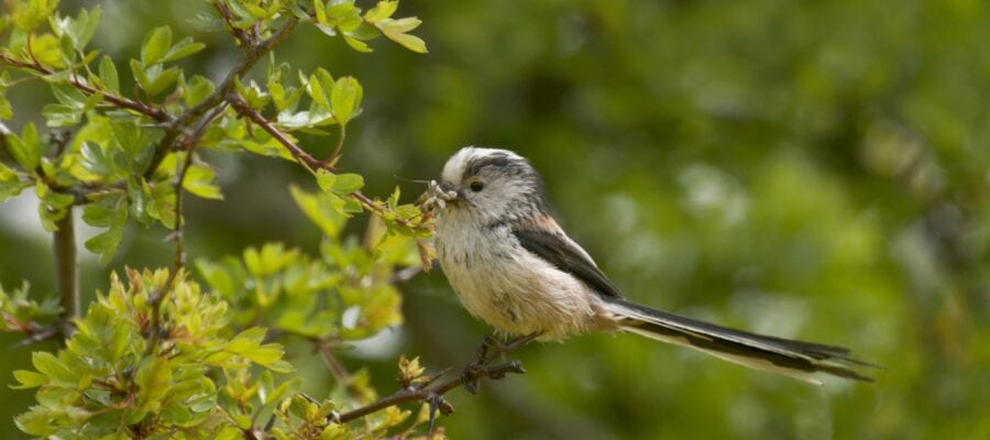 Mild Winter Boosts Smaller Birds