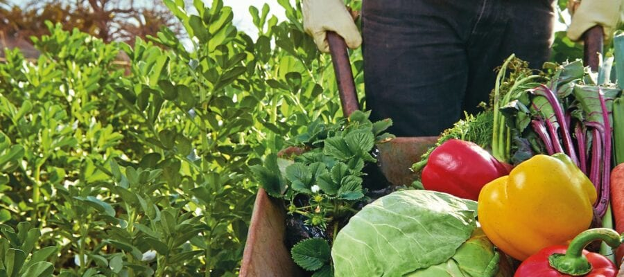 Enjoy the health benefits of growing your own (and eating it!)