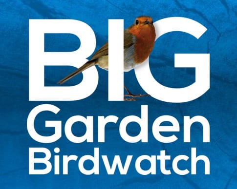 Help the RSPB track our feathered friends
