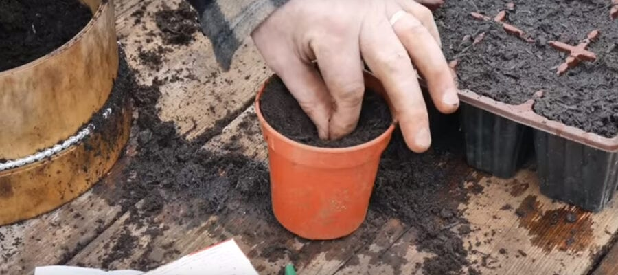 VIDEO: Sowing Courgettes