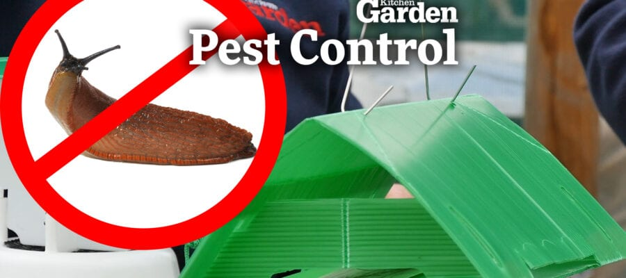 Video:The Best Traps to STOP Pests in the Garden