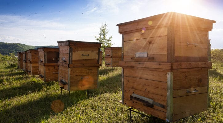 New UN research highlights bee friendly nations