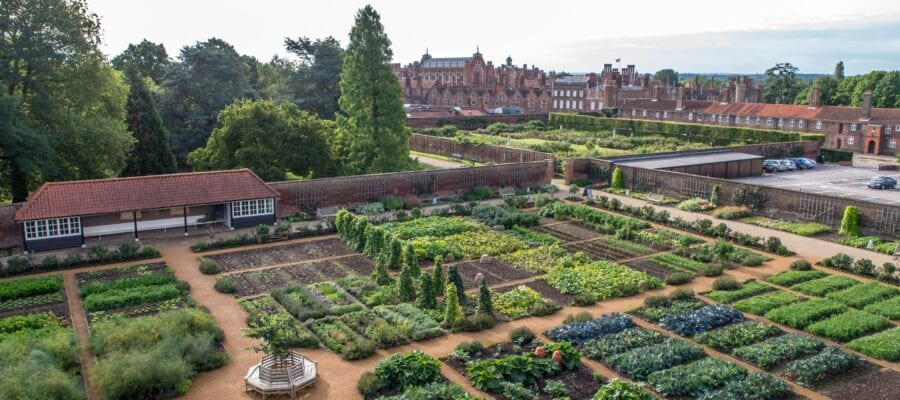 Exciting year ahead for Hampton Court Palace's royal gardens