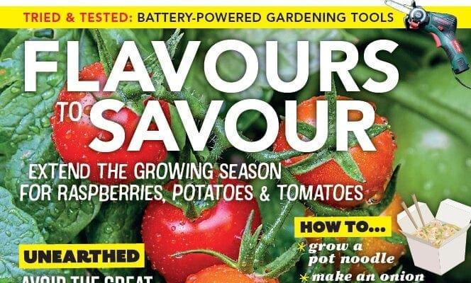 This month in Kitchen Garden