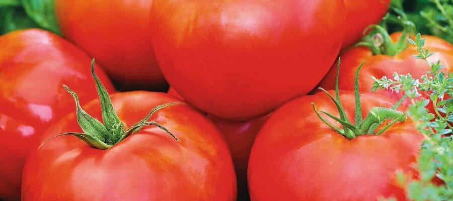 In This Year Of The Tomato...Why Not Try A New Variety?