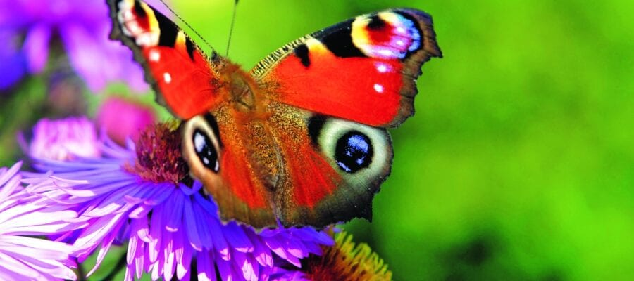 Join the butterfly count