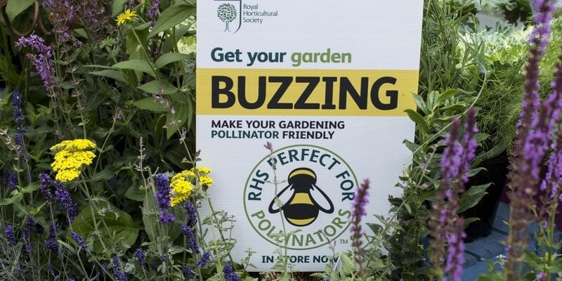 What's 'perfect for pollinators' on your plot?