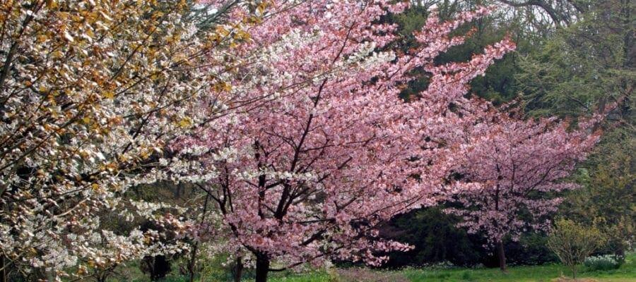Spring spectacular at beautiful Batsford Arboretum