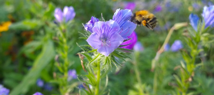 Gardeners ID best plants for bees