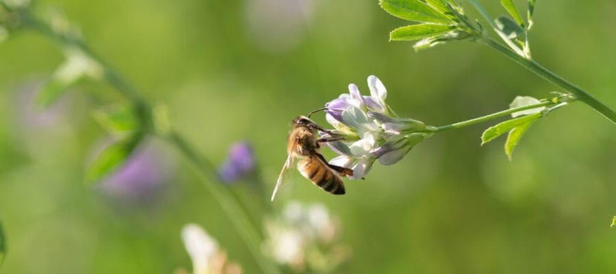 Five ways you can help protect the bees