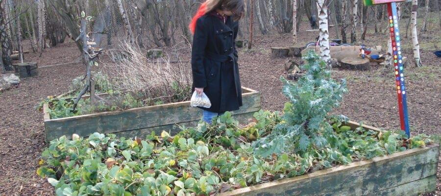 Community garden saved from development