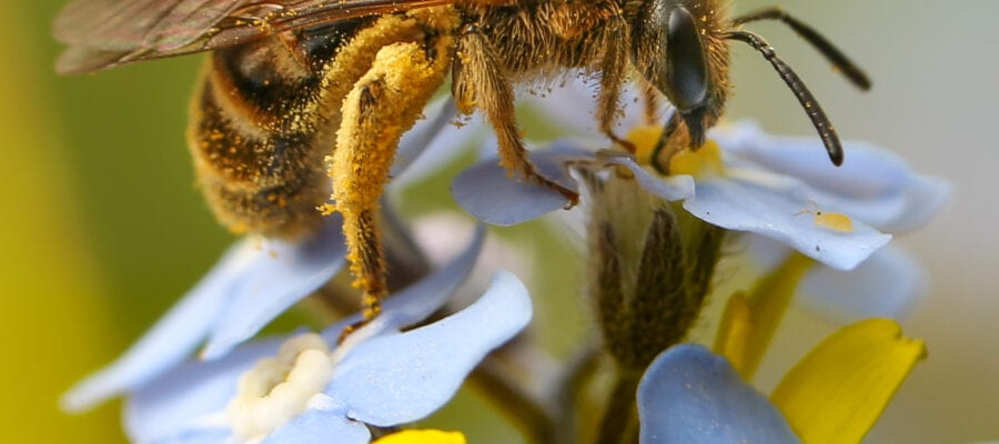 Thousands take part in Great British Bee Count – and there's still time to join the buzz!