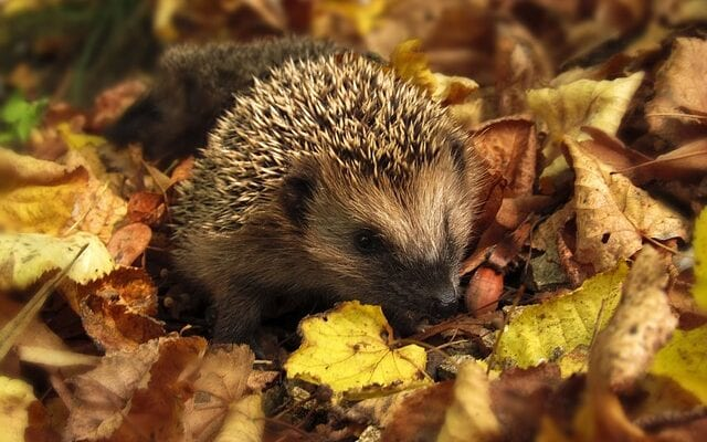 Bonfire Safety for HibernatingWildlife