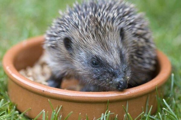 Be hedgehog-aware!