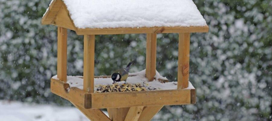 Better bird-feeding