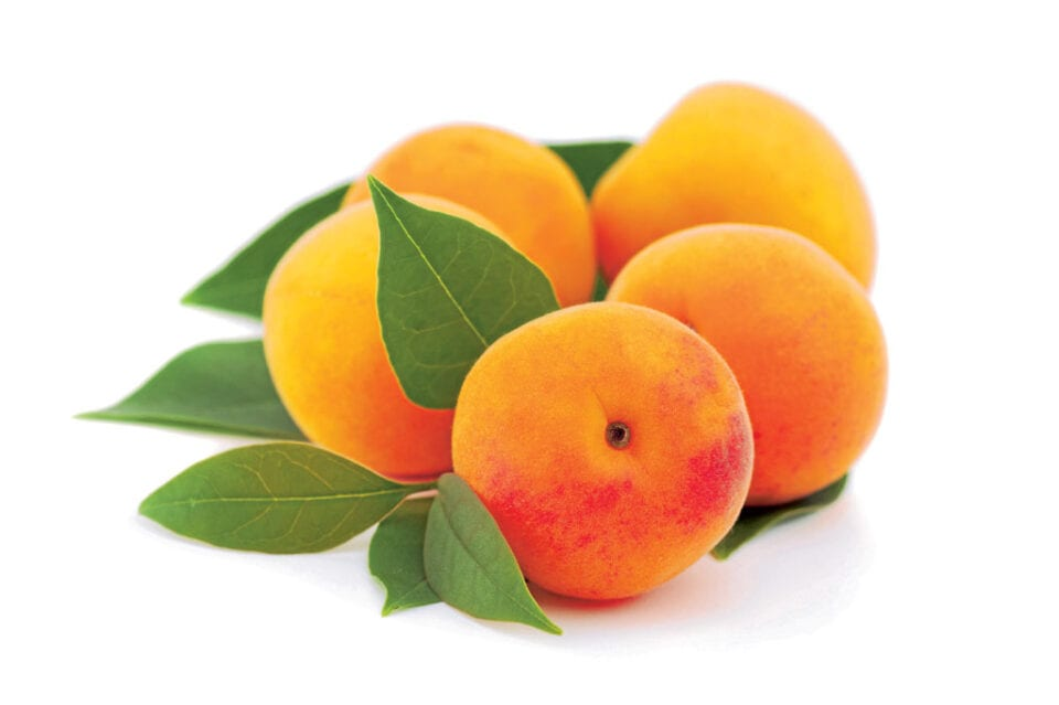 A bunch of Apricots on a white background.