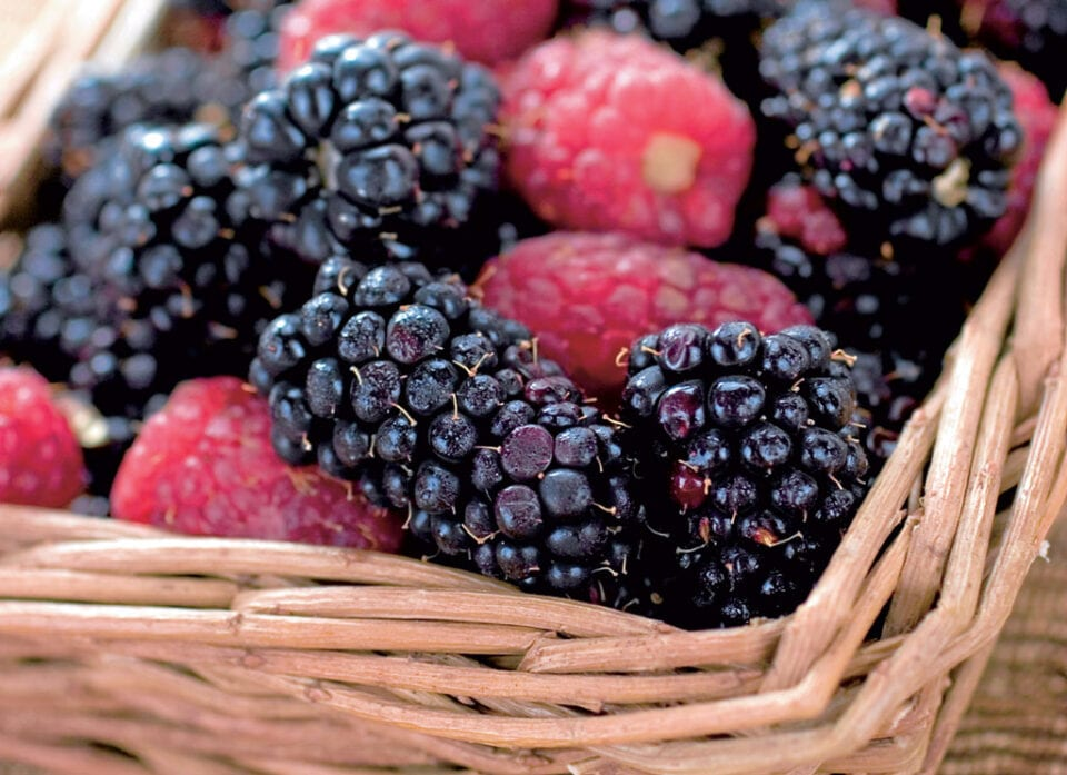 A basket of blackberries.