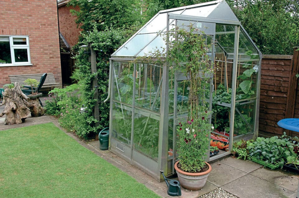 An image of a small greenhouse filled with plants in someone's back garden.