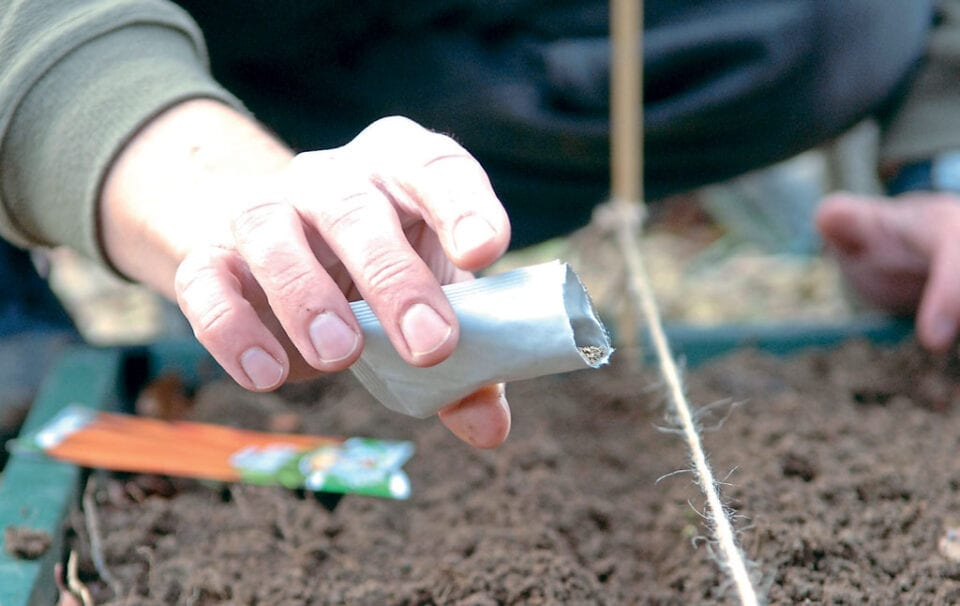 A person pouring seeds onto prepared soil in order to sow them.