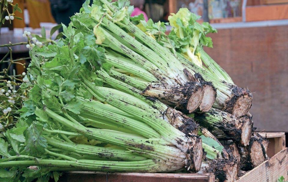 Freshly harvested celery.