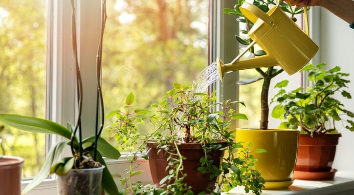 Watering houseplants using cooled cooking water