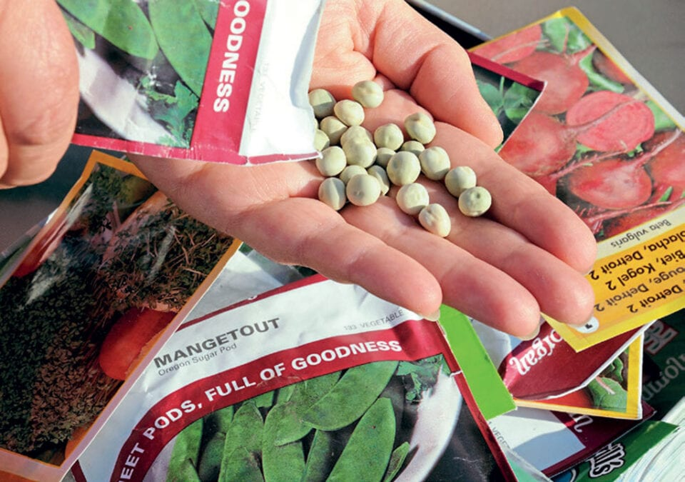 A hand holding a bunch of seeds.